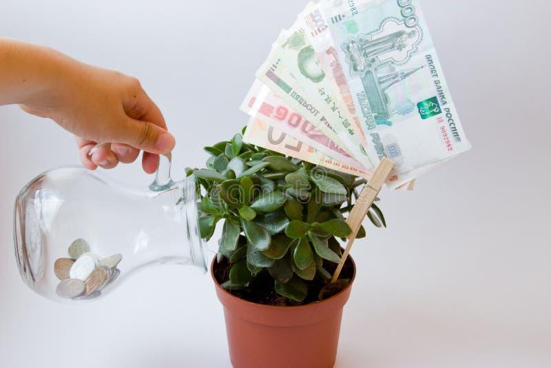 Дерево денег заботы стоковые фото