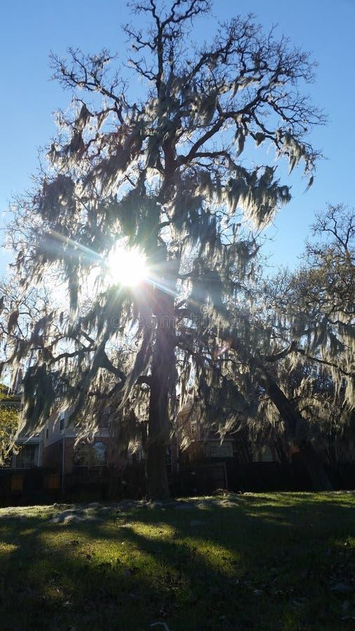 Дерево жизни на солнечный день стоковое фото
