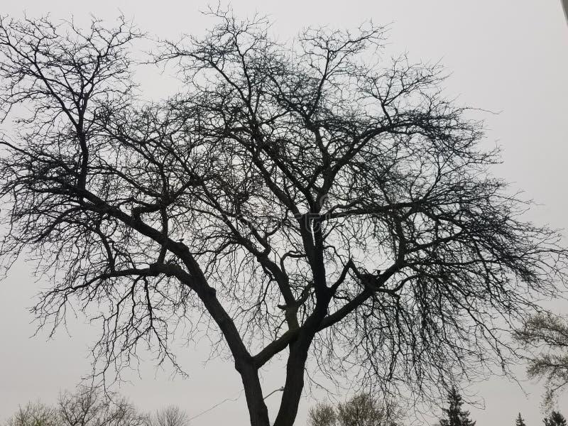 Дерево жизни стоковые фотографии rf