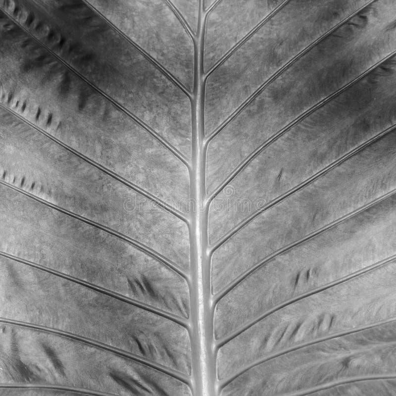 Дерево жизни стоковые изображения