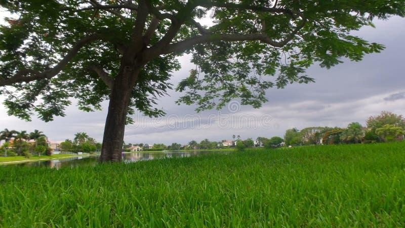 Дерево жизни стоковое фото