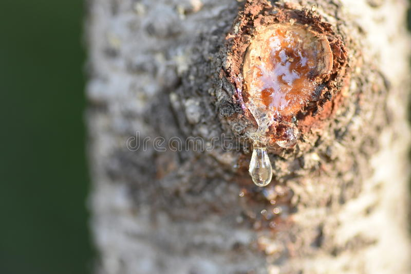 Дерево жизни стоковое фото rf