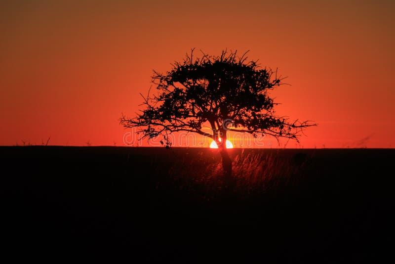 Дерево зарево стоковое изображение