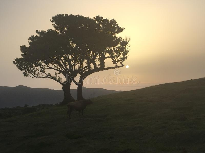 Дерево захода солнца стоковые фото