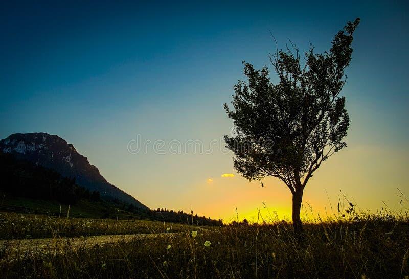 Дерево захода солнца стоковые изображения rf
