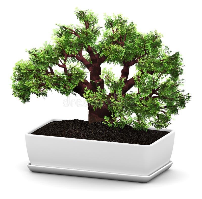 Дерево зеленого цвета баобаба бонзаев в цветочном горшке иллюстрация вектора