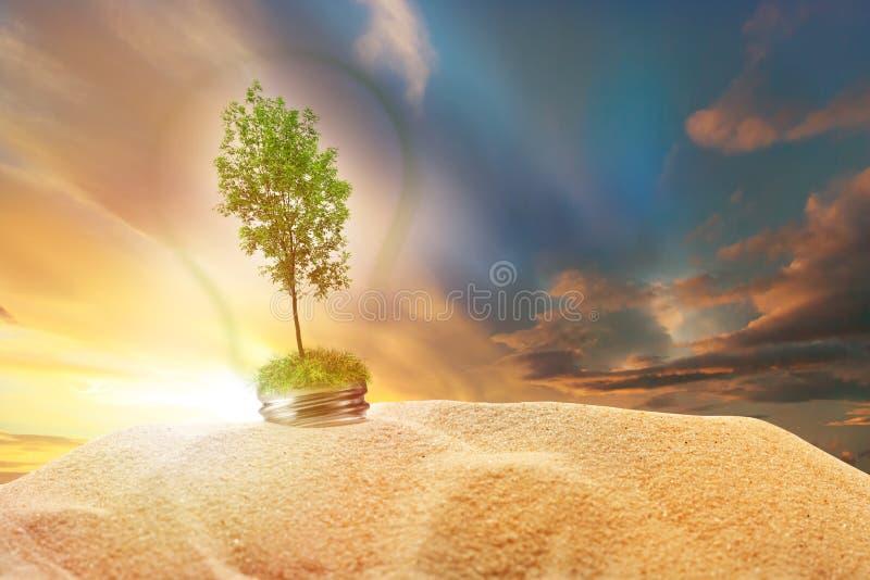 Дерево зеленой золы внутри лампы в песке на небе захода солнца стоковое изображение