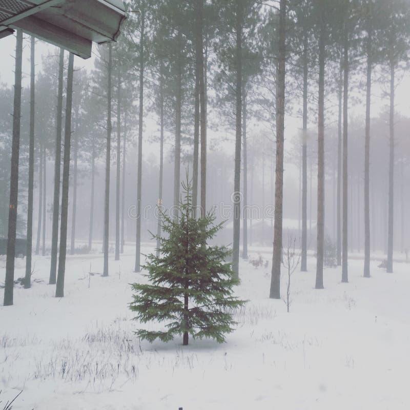 Дерево зимы Висконсина стоковая фотография rf