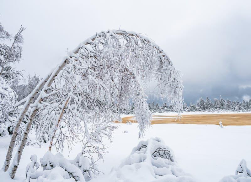 Дерево зимы Фибоначчи в гористой местности Moore стоковое изображение rf