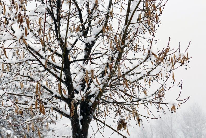 Дерево зимы холодное с зимним временем снега стоковые изображения rf