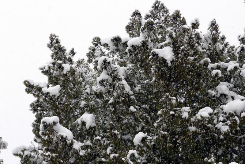 Дерево зимы холодное с зимним временем снега стоковое фото