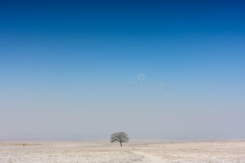 Дерево зимы стоковые изображения rf