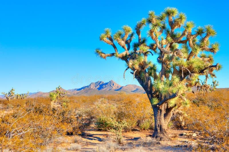 Дерево Иешуа стоковое фото rf