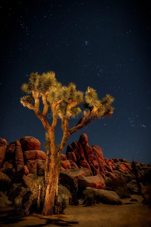 Дерево Иешуа Nightime стоковое изображение rf