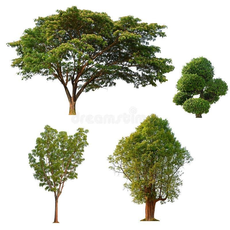 Дерево изолировало собрание на белой предпосылке, тропическом isol дерева стоковые фото
