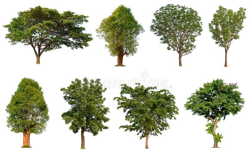 Дерево изолировало собрание на белой предпосылке, тропическом isol дерева стоковая фотография