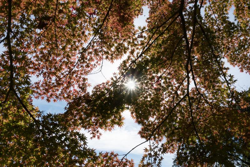 Дерево или завод с зелеными лист лимба от нижнего взгляда стоковая фотография rf