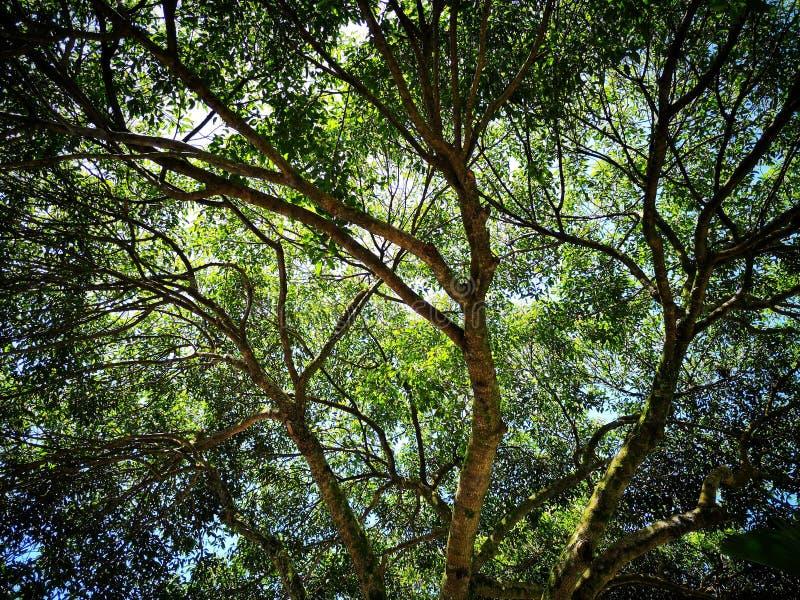Дерево и ветви стоковая фотография rf