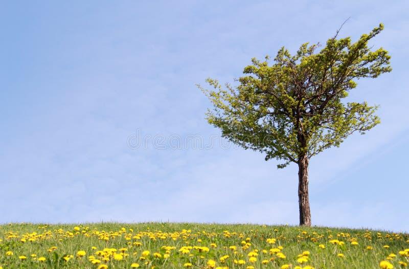 Дерево и желтый цветок на холме стоковое изображение