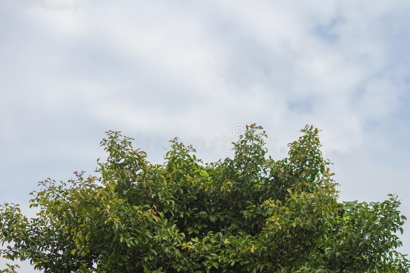 Дерево и небо лета стоковое изображение rf
