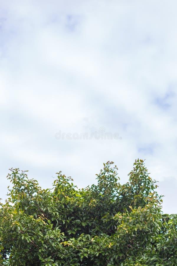 Дерево и небо лета стоковое изображение
