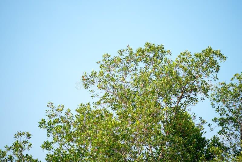 Дерево и небо стоковые изображения