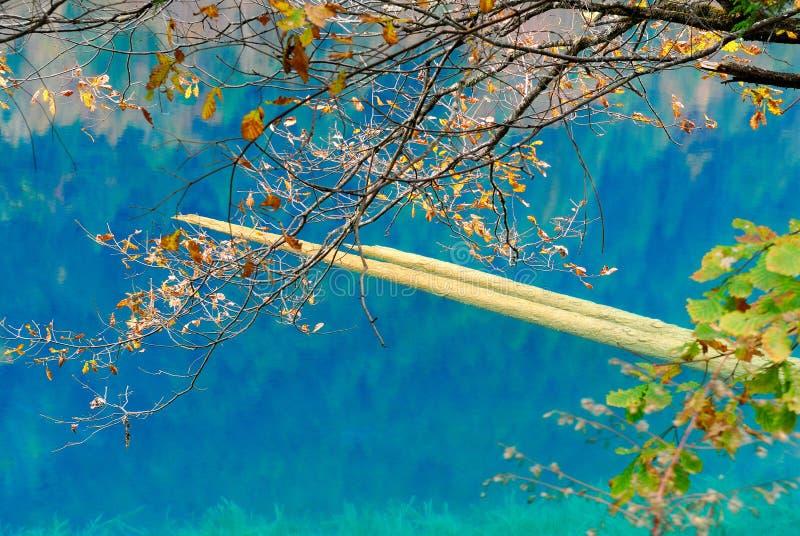 Download Дерево и озеро осени стоковое фото. изображение насчитывающей экологичность - 33725872
