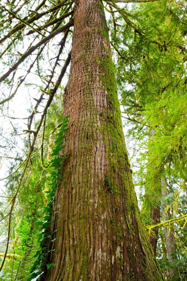 Дерево и папоротники в лесе стоковое изображение