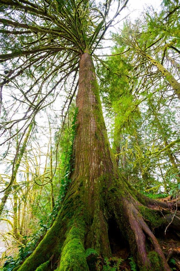 Дерево и папоротники в лесе стоковые фото