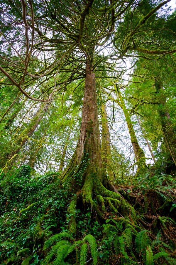 Дерево и папоротники в лесе стоковая фотография