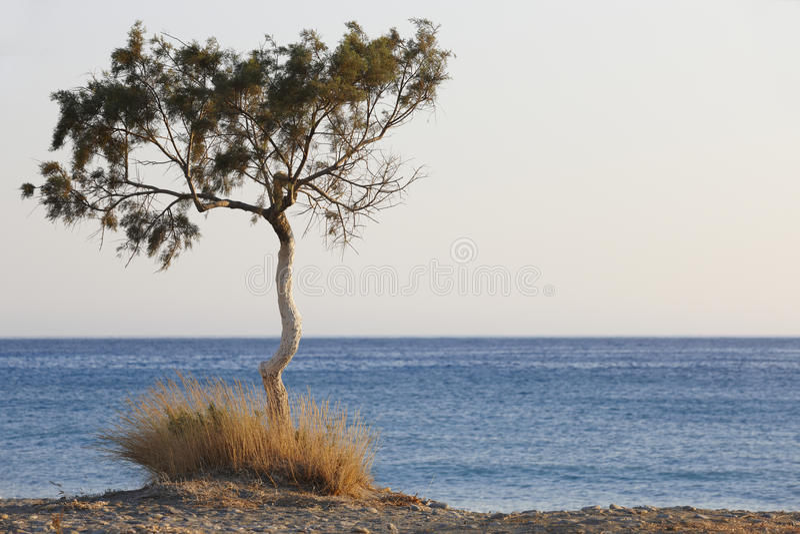 Дерево и Средиземное море на заходе солнца в Plakias Крит Греция стоковое изображение rf