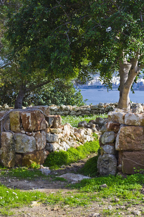 Дерево и стена наряду с узкой дорогой сельской местности стоковое фото rf