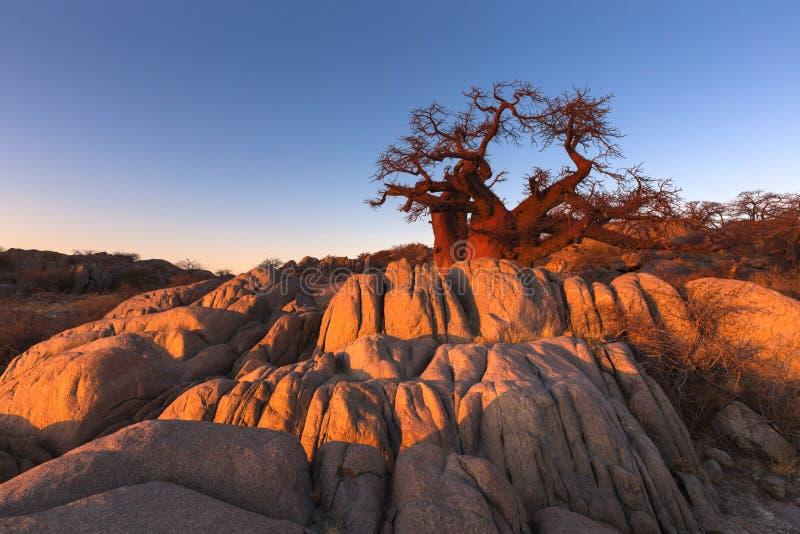 Дерево и утесы баобаба стоковое фото rf
