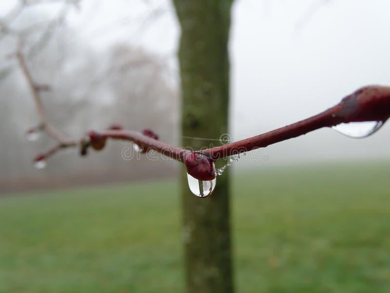 Дерево капельки воды фокусируя в своей предпосылке стоковые изображения rf