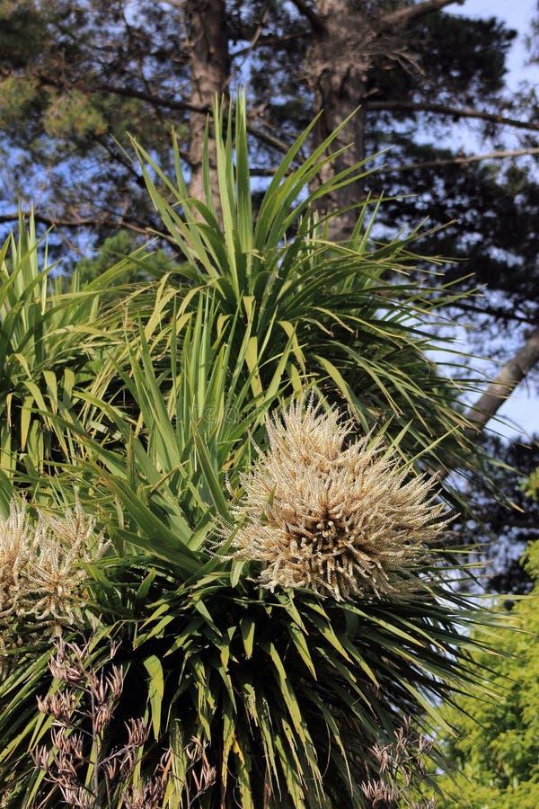Дерево капусты в цветке стоковые изображения