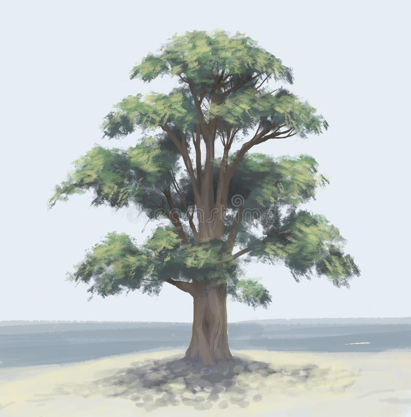 Дерево кедра бесплатная иллюстрация