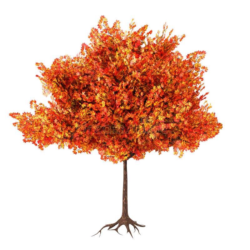 Дерево клена осени, иллюстрация 3d иллюстрация штока