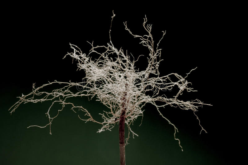 Дерево корней 1 стоковое фото