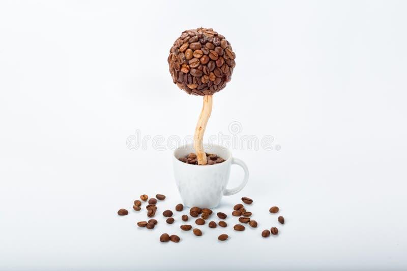 Дерево кофе в чашке стоковые фото