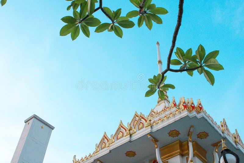 Дерево крематорий и Plumeria стоковые изображения