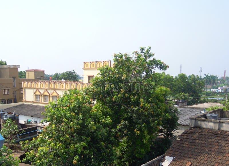 """Дерево манго с деревом """"Neem """"медицины и другим обзором стоковые фотографии rf"""