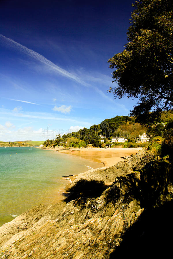 Дерево над пляжем на береге на Salcombe стоковые фото