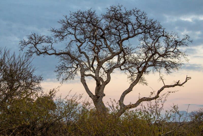 Дерево национального парка горы таблицы стоковая фотография