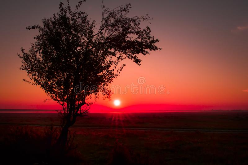 Дерево на восходе солнца стоковое изображение rf