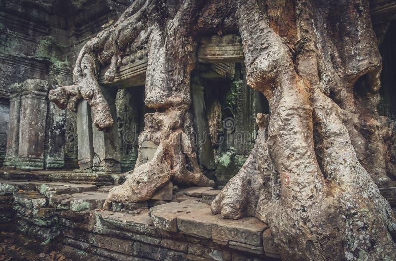 Дерево на входе виска стоковые изображения