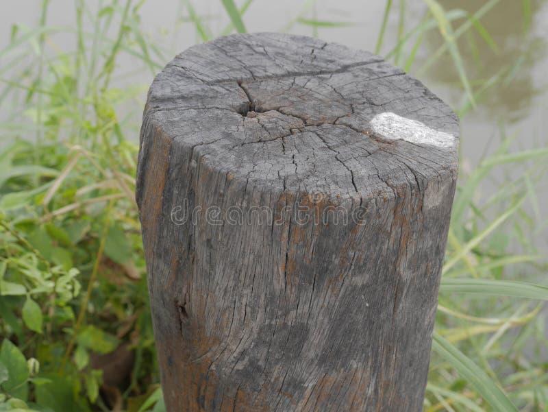 Дерево на дороге стоковые изображения rf