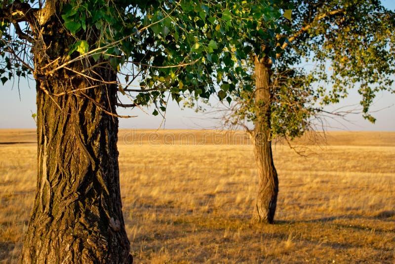 Дерево на заходе солнца стоковая фотография rf