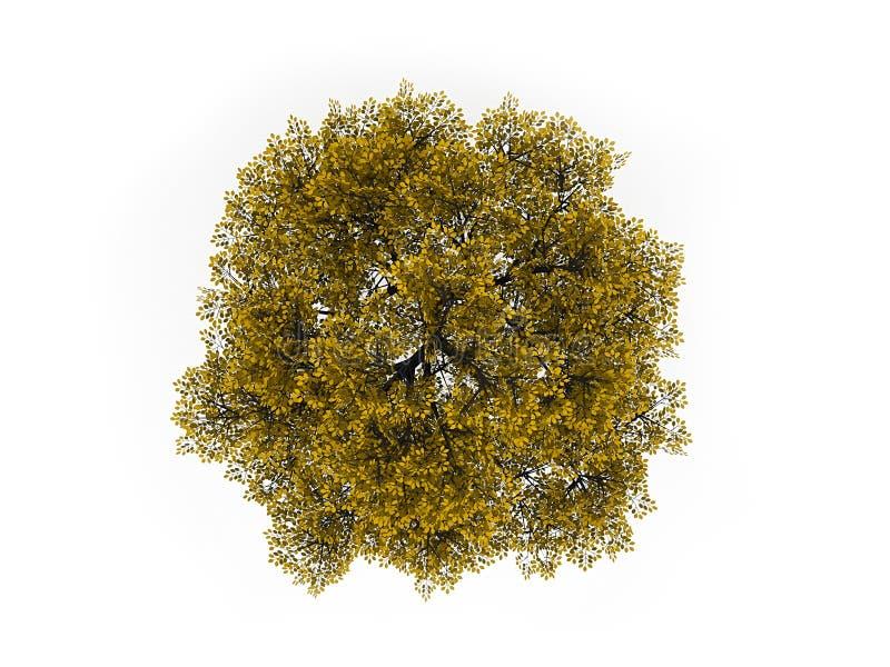 Дерево на изолированной верхней части в желтом цвете бесплатная иллюстрация