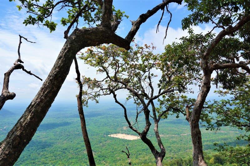 Дерево на краю скалы стоковые изображения rf