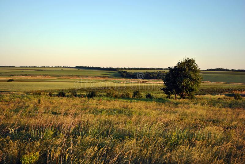Дерево на лужайке в зелен-желтой траве, холмы на горизонте, яркое голубое небо, лето стоковое изображение rf
